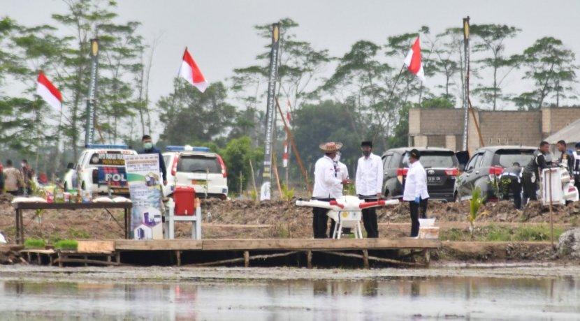 Plt. Gubernur Dampingi Presiden Joko Widodo Tinjau Lokasi Tanam Perdana Desa Belanti Siam, Tandai Dimulainya Program Food Estate di Kalteng